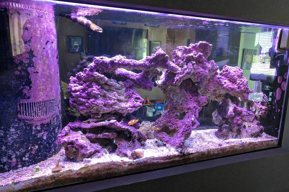 How To Remove Coralline Algae On Glass (Or Acrylic)